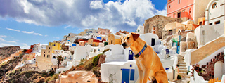 Holidays with your dog in Greece
